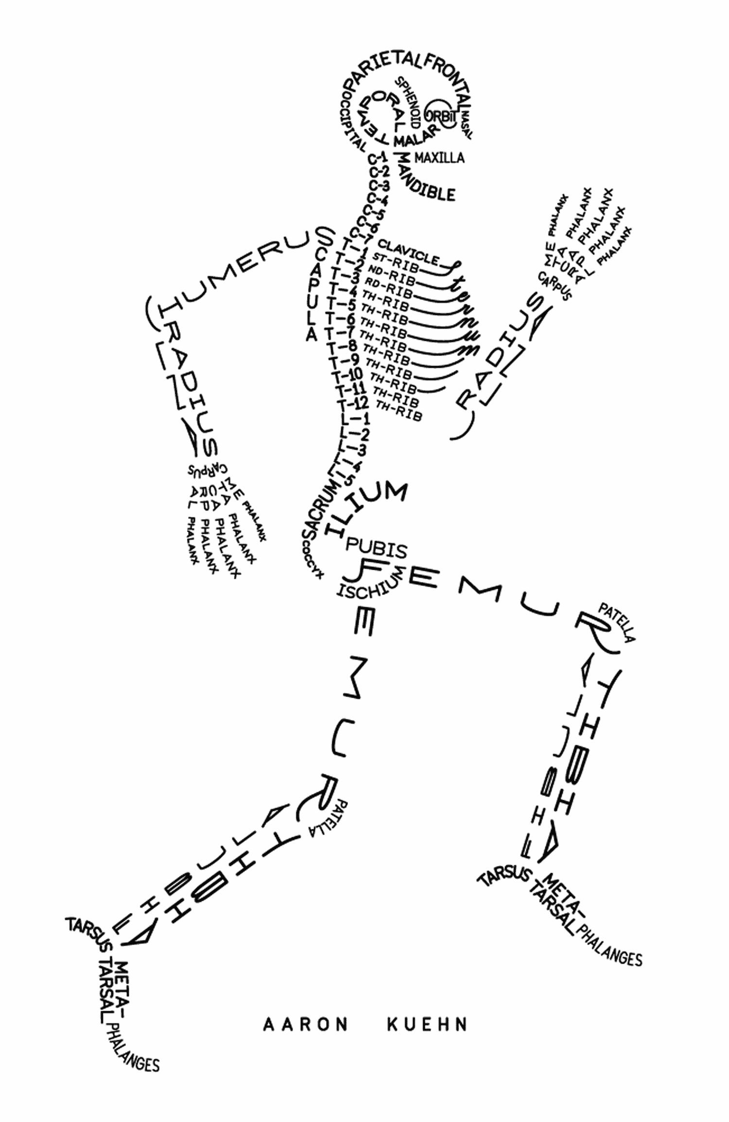 fun skeleton diagram  u2013 the daily ease